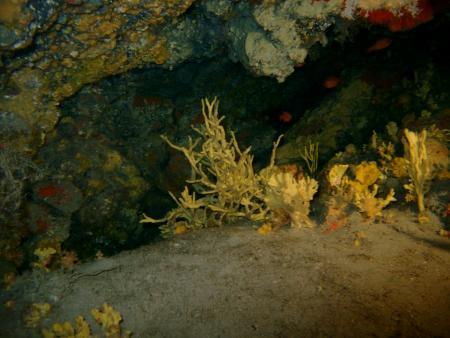 R.C. Diving,Puerto del Carmen,Lanzarote,Kanarische Inseln,Spanien