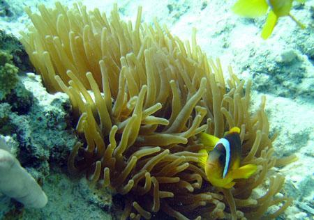 Mermaid Divers,Marsa Alam (Nada Resort),Marsa Alam und südlich,Ägypten
