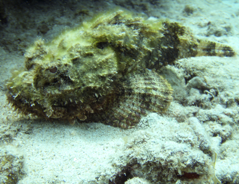 Südküste, Südküste,Curaçao,Niederländische Antillen