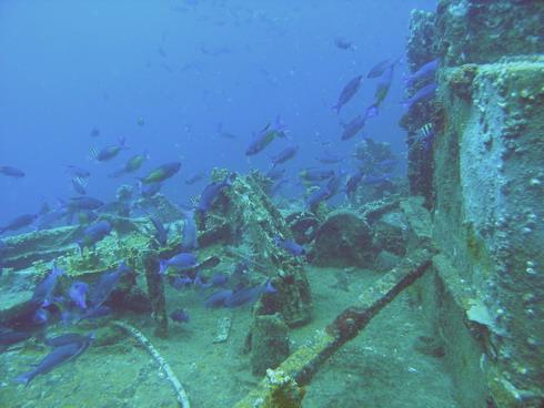 Upperbus & Wreck Veronika, Grand Ansen, Veronika Wreck,Grenada
