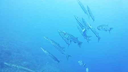 Dive Planet Cavo (ex Cavo Diving),Cavo,Elba,Italien