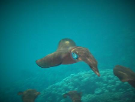 Blue Ocean,Marsa Alam,Marsa Alam und südlich,Ägypten