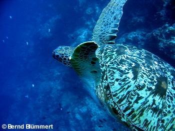 Blue Bay Divers,Sahaung Island,Nord Sulawesi,Sulawesi,Indonesien