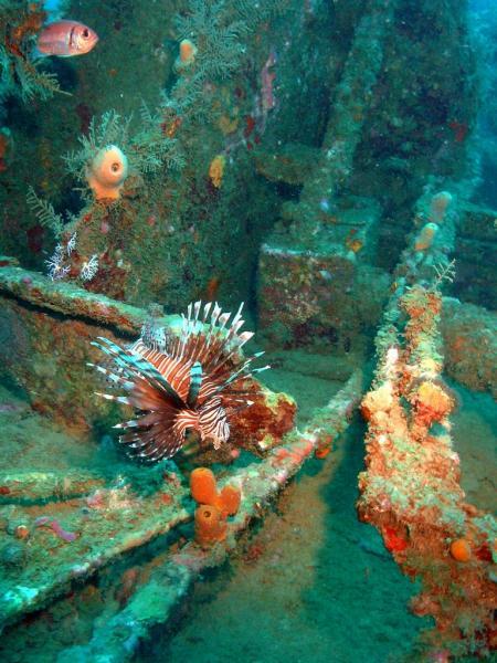 Wrack Tanya V,Juan Dolio,Dominikanische Republik