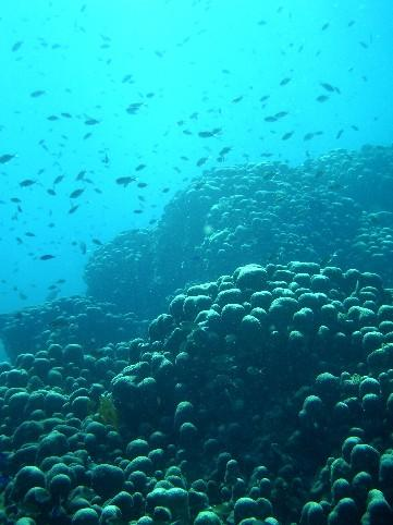 Cabrits Dive,Portsmouth,Dominica