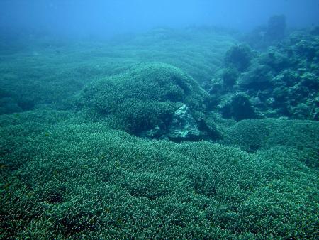 "Aberration Dive Club ""Hollyette's"" auf Siquijor,Philippinen"