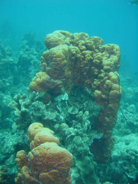 Habitat Curacao,Curaçao,Niederländische Antillen
