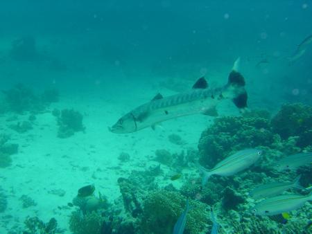 Easy Divers Academy,El Gouna,Hurghada,Ägypten