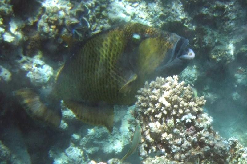 Naama Bay, Naama Bay (Sharm El Sheikh),Ägypten