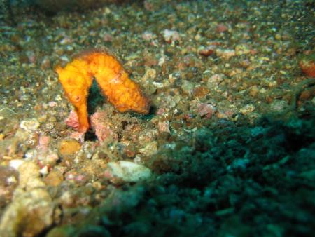 SDQ - Sulawesi Dive Quest - Lembeh,Sulawesi,Indonesien