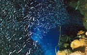 Cuba-Divers,Guardalavaca,Kuba