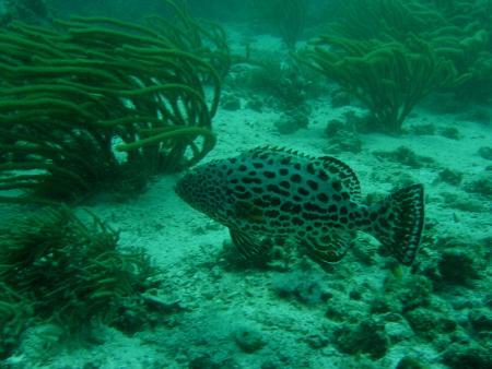 Enomis Divers,Isla de Margarita,Playa el Agua,Venezuela