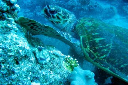 SeaMax Diving Center,Sharm el Sheikh,Sinai-Süd bis Nabq,Ägypten