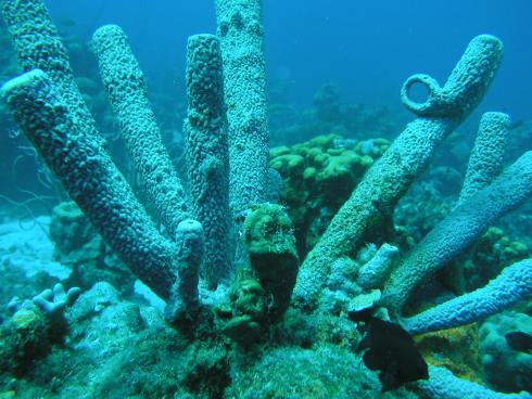 Curacao, Curacao,Curaçao,Niederländische Antillen
