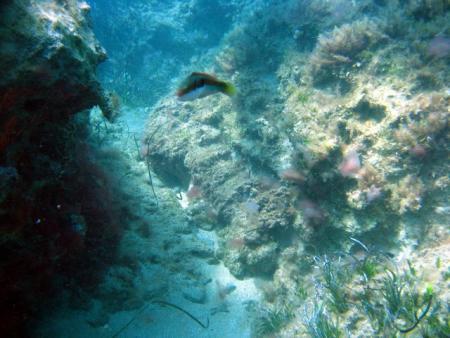 Cynthiana,Coral Bay,Zypern