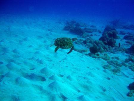 West Punt,Curaçao,Niederländische Antillen