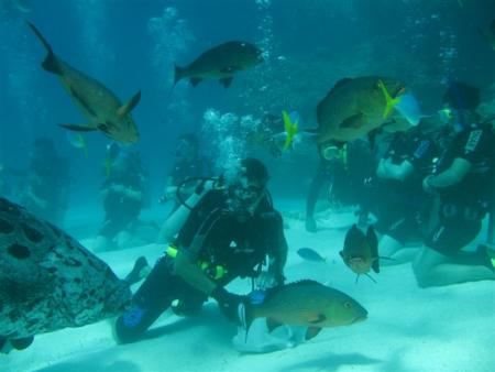 TAKA Dive,Cairns,Queensland,Australien