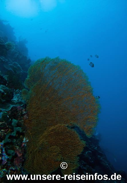 Living Colours,Bunaken,Sulawesi,Indonesien