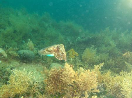 Diving Center ´Porec´,Kroatien