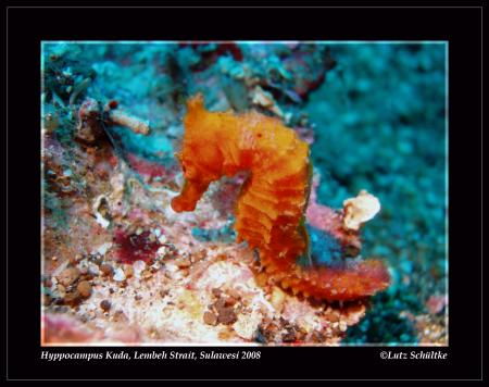 Nomad Adventure Divers,NAD,Sulawesi,Indonesien