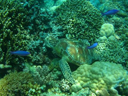 Dugong Dive Center,Dimakya Island,Busuanga,Philippinen
