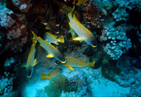 Dive In,Dinslaken,Nordrhein-Westfalen,Deutschland