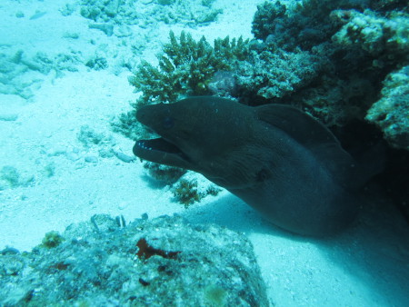 Bodu Hithi Coco Palm,Nord Male Atoll,Dive Ocean,Malediven