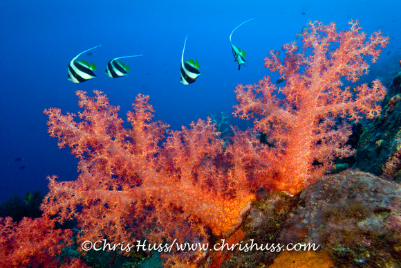Corals, The Junk, Thailand, Andamanensee