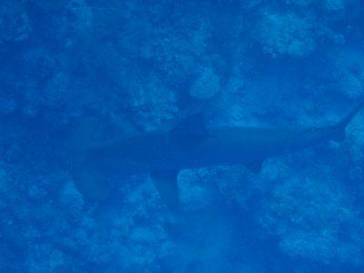 Orca Reisen,Ägypten