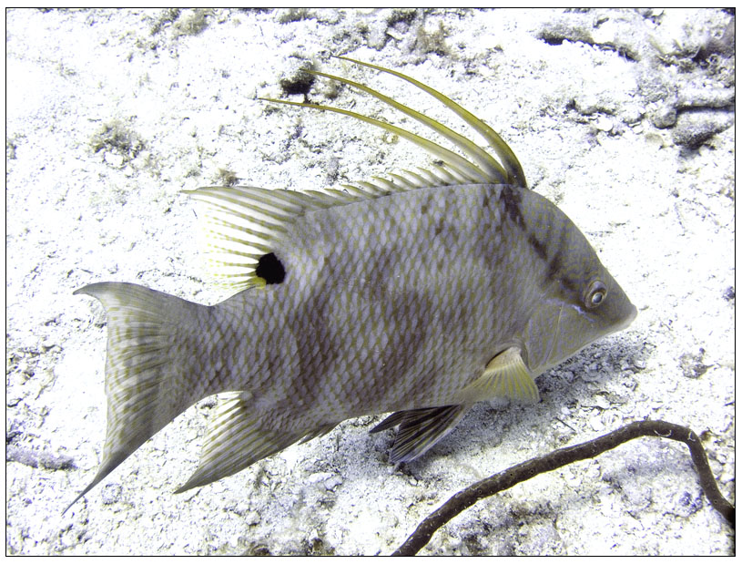 Bayahibe, Bayahibe,Dominikanische Republik