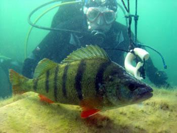 Tauchclub Aquanaut,Österreich