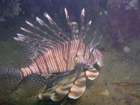 Ocean Dream Divers,Beau Vallon,Mahé,Mahe,I Lilot,Seychellen