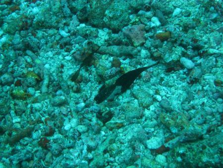Taveuni Ocean Sports,Taveuni,Fidschi