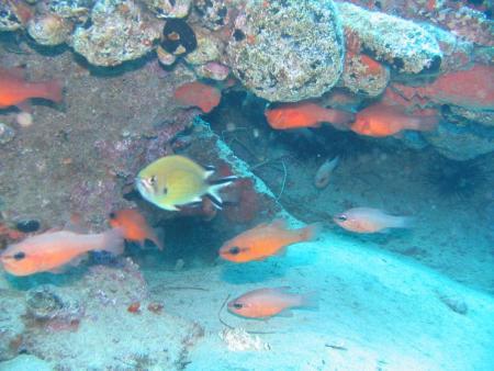 Robinson Club,Jandia,Fuerteventura,Kanarische Inseln,Spanien