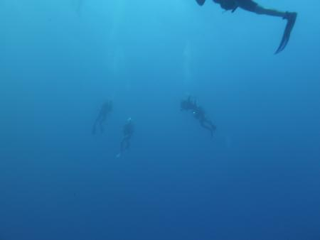Dressel Divers,Playa Paraiso,Mexiko