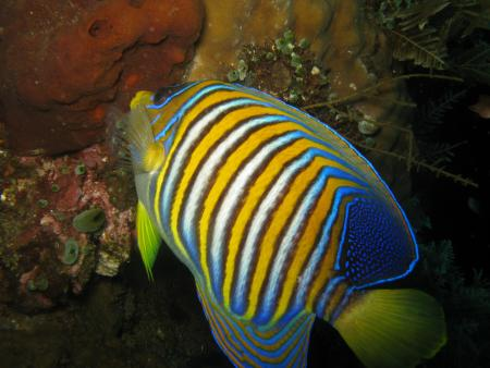 Bali Adventure Diving,Bali,Indonesien