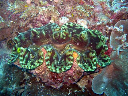 Scuba Quest Dive Center,Kamala,Andamanensee,Thailand