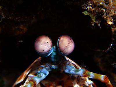 Indo-Diver.com,Indonesien