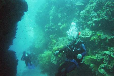 Daydream Dive Adventures,Australien