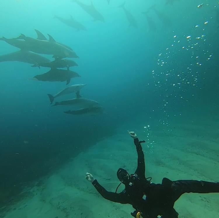 Dolphins everywhere , Blue Ocean Dive Resort, Umkomaas Aliwal Shoal, Südafrika