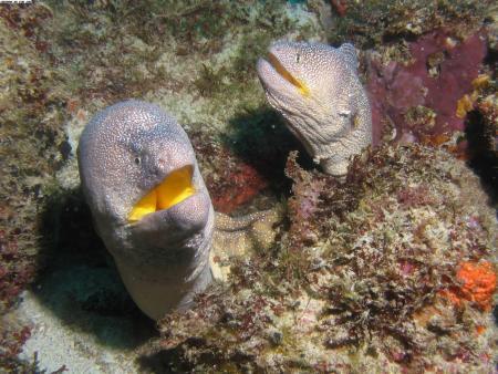 Sun Divers Ltd.,Flic en Flac,Mauritius