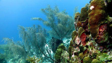 Sun Reef Village,Curacao Divers (Sun Reef Village),Sint Michiel,Curaçao,Niederländische Antillen