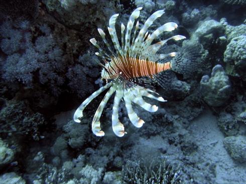Dahab - Ricks Reef, Ricks Reef,Dahab,Ägypten
