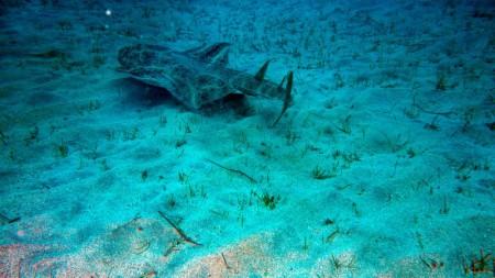 Dawn Dives Academy  Playa Blanca Lanzarote,Kanarische Inseln,Spanien