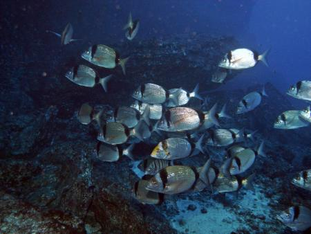 Fan Diving,El Hierro,Kanarische Inseln,Spanien