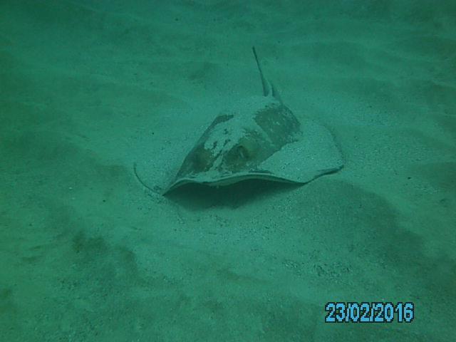 Daivoon Dive Center, Lanzarote, Costa Teguise, Spanien, Kanarische Inseln
