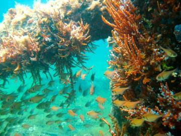 DiveShed,Busselton,Westaustralien,Australien