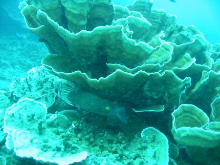 Divers in Paradise Koh Samui,Golf von Thailand,Thailand