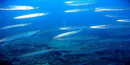 Andaman Divers,Phuket,Andamanensee,Thailand