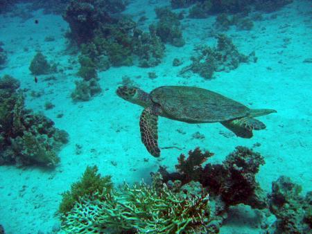 Annette & Robby RedSea-Divers,Zahabia Beach,Hurghada,Ägypten